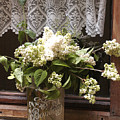 Bonbons White Hydrangeas France by Dan Albright