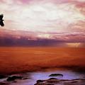 Bondi Beach by Peter Creighton