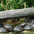 Bonding Box Turtles by Emmy Vickers