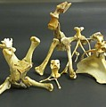 Bone Creatures One by John Malone