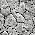 Bone Dry  by Olivier Le Queinec