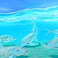 Bonefish by Paola Correa de Albury