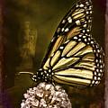 Boneyard Butterfly by Chris Lord