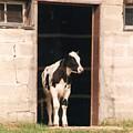 Bonjour Mon Ami - Photograph by Jackie Mueller-Jones