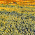 Bonneuil Harvest by Terry w Scales