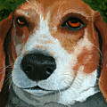 Bonnie - Beagle Painting by Linda Apple