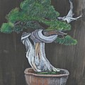 Bonsai #2 by Richard Le Page