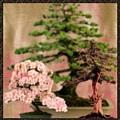 Bonsai Garden by Jannina Ortiz