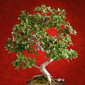 Bonsai Tree by Antonio Gravante
