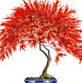 Bonsai Tree - Inaba Shidare by Michael Vigliotti