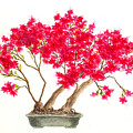Bonsai Tree - Kurume Azalea by Michael Vigliotti