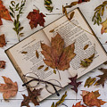 Book Of Autumn by Kim Hojnacki