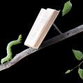 Book Worm by Cindy Singleton