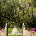 Boone Hall Plantation by Eggers Photography