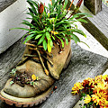 Booted Plant by Cate Franklyn