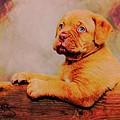 Bordeaux Mastiff Pup by Robert Kinser