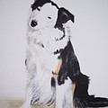 Border Collie - Birch by Janice M Booth