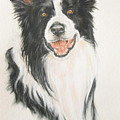 Border Collie by Barbara Keith