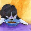 Border Collie Puppy by Mary Jo Zorad