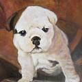 Bashful  Brown Eared Boris                  Flying Lamb Productions  by Sigrid Tune