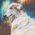 Borzoi Portrait by Wolf Shadow Photography