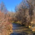 Bosque De Rio De Taos by Charles Muhle