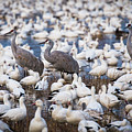 Bosque Waterfowl Mix by Randy Jackson