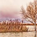 Bosque Winter II by Diana Powell