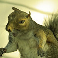 Bossy Squirrel by Angelcia Wright