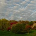 Boston Arnold Arboretum by Juergen Roth
