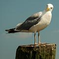 Boston Bay Birdy by Vm Vassolo