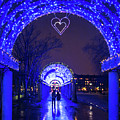 Boston Ma Christopher Columbus Park Trellis Lit Up For Valentine's Day Rainy Night by Toby McGuire