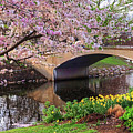 Boston Ma Spring Tree On The Charles River Esplanade Boston Ma by Toby McGuire