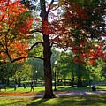Boston Public Garden Autumn Tree Morning Light Walk In The Park by Toby McGuire