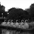 Boston Public Garden Swan Boats by Gina Sullivan