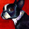 Boston Terrier Dog Portrait 2 by Svetlana Novikova