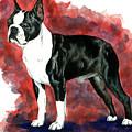 Boston Terrier by Kathleen Sepulveda