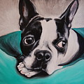 Boston Terrier Portrait by Emily Curtin