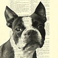 Boston Terrier Portrait In Black And White by Madame Memento