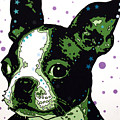 Boston Terrier Puppy by Dean Russo