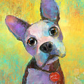 Boston Terrier Puppy Dog Painting Print by Svetlana Novikova