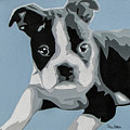 Boston Terrier by Slade Roberts