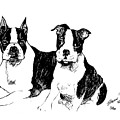 Boston Terriers by Charme Curtin
