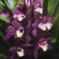 Botanic Garden Orchid Bouquet 5 by Rebecca Snyder