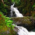 Botanic Gardens Waterfall by James O Thompson