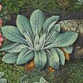 Botanical by Abigail Lyman