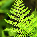 Botanical Fern by Christina Rollo