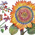 Botanical Flower-46 Sunflower Drawing by Julie Richman