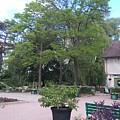 Botanical Garden by Connie Du