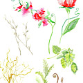 Botanical Nature - Spring Study 1 by Audrey Jeanne Roberts